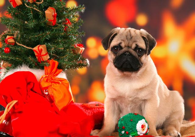 Χριστούγεννα με τον σκύλο μας ! Οι κίνδυνοι των γιορτών.