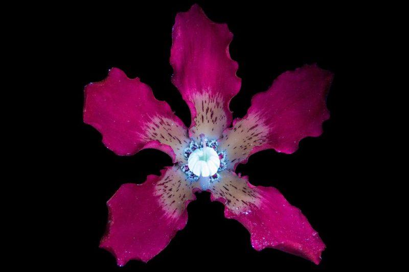 , Φωτογραφίες με λουλούδια που μοιάζουν φανταστικά!