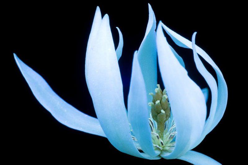 Φωτογραφίες με λουλούδια που μοιάζουν φανταστικά!