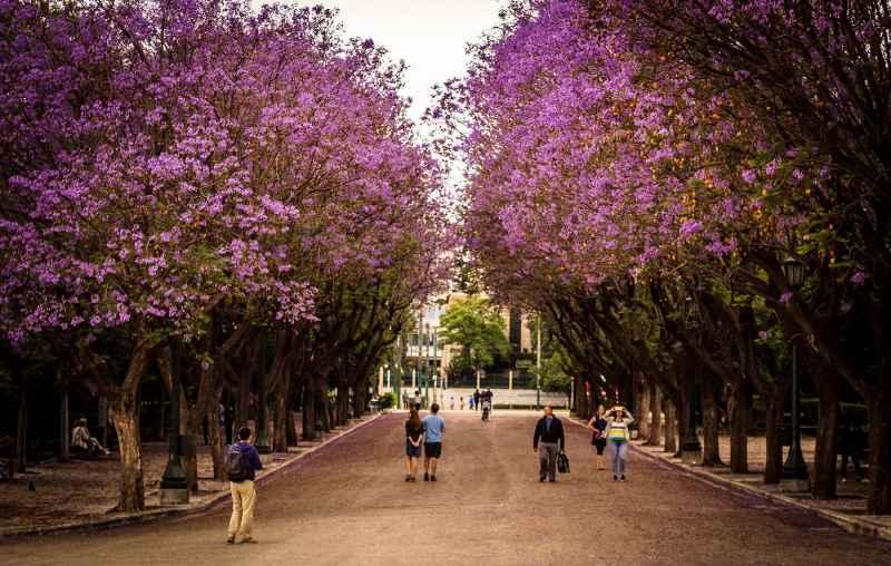 Γνωρίστε την Αθήνα μέσα από ξεναγήσεις