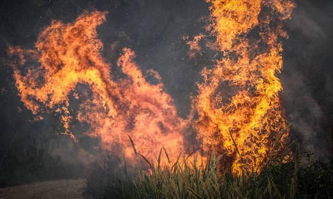 Μεγάλη φωτιά στα Άνω Λιόσια!
