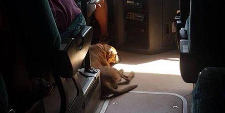 Οδηγός KTΕΛ παίρνει μαζί του αδέσποτο σκύλο για να μην υποφέρει από τον καύσωνα