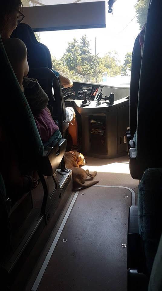 , Οδηγός KTΕΛ παίρνει μαζί του αδέσποτο σκύλο για να μην υποφέρει από τον καύσωνα
