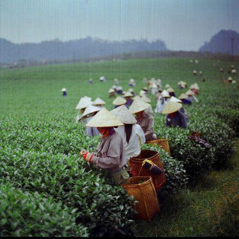 Τσάι Matcha: Μια διαφορετική εκδοχή του πράσινου τσαγιού