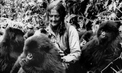 Νταϊάν Φόσεϊ... η γυναίκα που αφιερώθηκε στη διάσωση του ορεινού γορίλα «φεύγει» σαν σήμερα