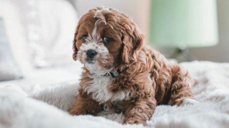 Πόσες ώρες μπορείς να αφήνεις το σκύλο σου μόνο στο σπίτι;
