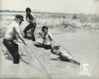 , «Ο Βάλτος»: Μια ταινία του 1973, μικρογραφία της Ελληνικής κοινωνίας του 2019