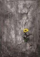 , Πολιτιστικός Τουρισμός στη Σαντορίνη | Ένα λουλούδι για ένα Ποίημα – Ομαδική Έκθεση Ζωγραφικής