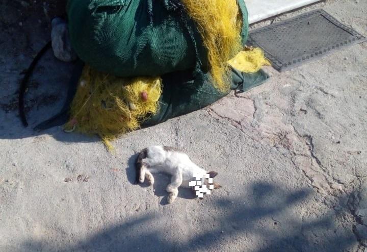 , Αναζητείται ο 74χρονος που σκότωσε το γατάκι. Στα χέρια της Αστυνομίας η υπόθεση