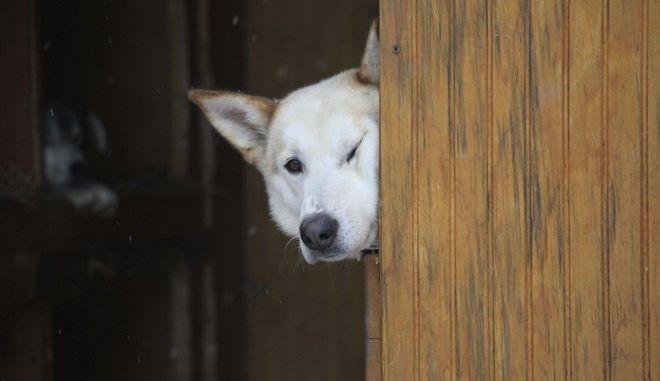 , Κορονοϊός: Ο κτηνιατρικός σύλλογος τονίζει ότι δεν πέθανε σκύλος λόγω του ιού